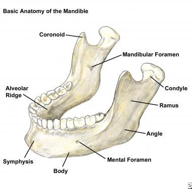 coronoid process | coronoid process of the mandible coronoid, Human Body