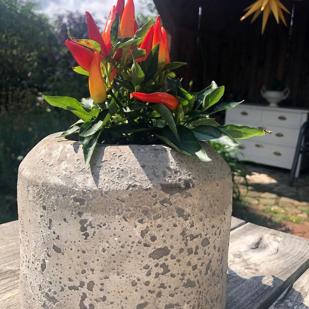 Nofilter Chili Peppers Paprika Geschenk Garten Pflanzenliebe Plantasdecorativas Beton Gartenideen Gartenpflanzen Mit Bildern Garten Ideen Garten Gartenpflanzen