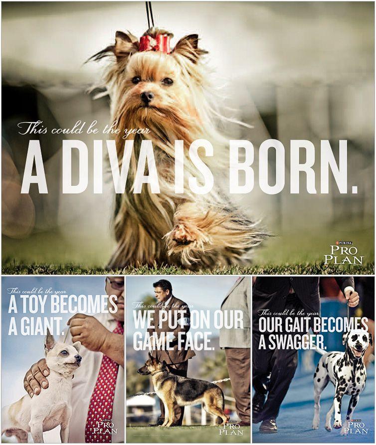 purina pro plan ads Westminster dog show, Purina dog