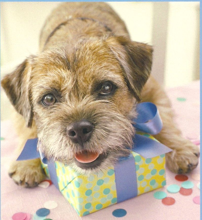 Border Terrier By Hallmark 1 This Photo Looks Exactly Like Our