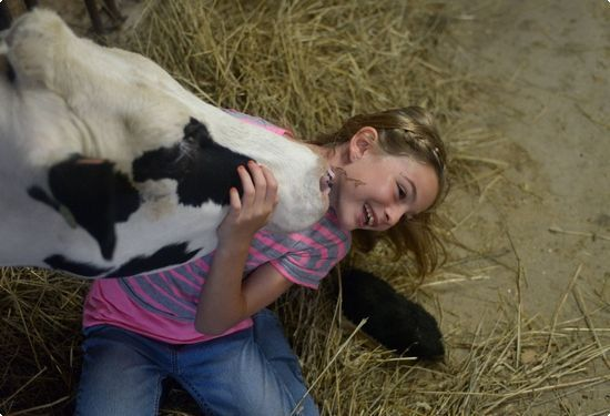 Sara Haag gets some affection from a cow on her family's Centre Township dairy barn. | Reading Eagle - BERKSCOUNTRY