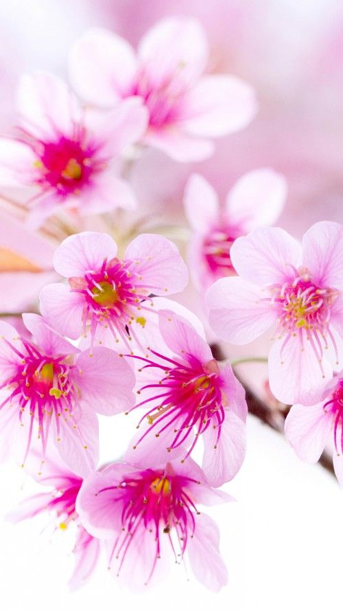 Pretty flowers youwall pretty pink flower wallpaper flores in 2018 pretty flowers youwall pretty pink flower wallpaper mightylinksfo