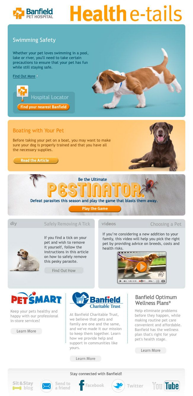 Banfield E Newsletter Layout Newsletter Layout Email Blast Magazine Layout