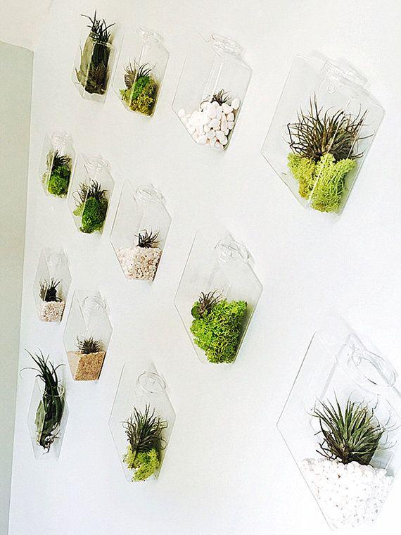 Set Of 10 Rhombus Glass Wall Vase Indoor Wall Planters 400 x 300