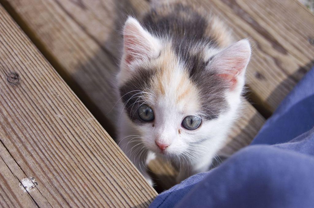 "magicalmeow "" Kitten. ) by Via Flickr"