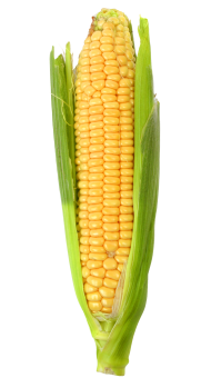 Download Corn Png Images Background Png Free Png Images Corn Png Cute Food