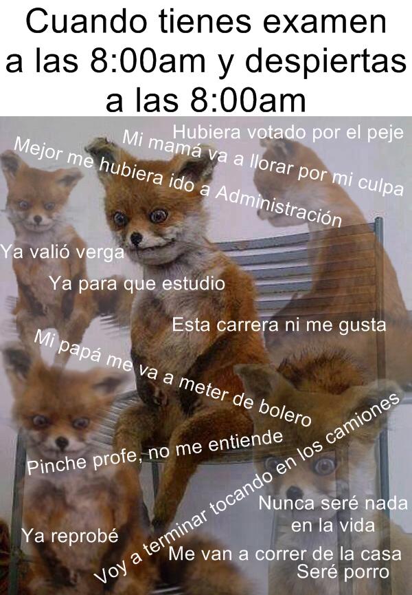 Zorro Meme Memes De Risa Memes Graciosos Frases De Risa