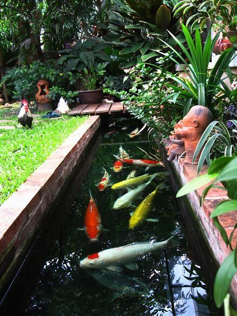 ป กพ นในบอร ด Fishery