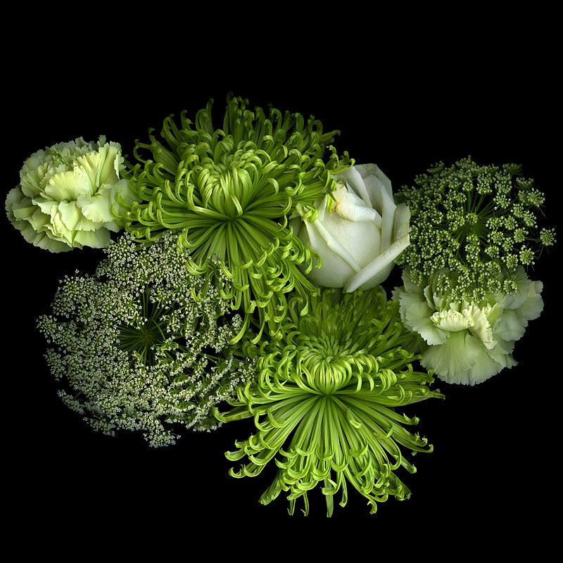 •♥• THE GREAT GREEN & WHITE FINALE.... by Magda indigo, via 500px