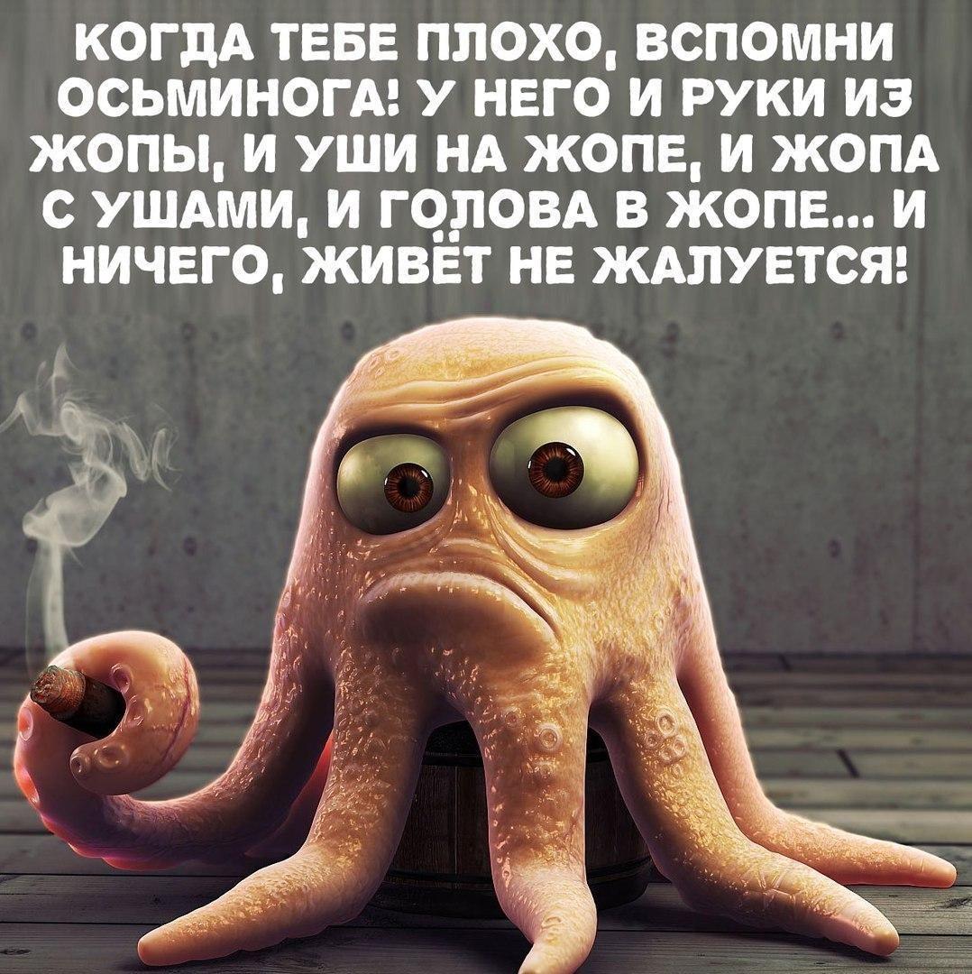смешные-картинки-с-надписями#смех#юмор#прикол#демотиватор (с ...
