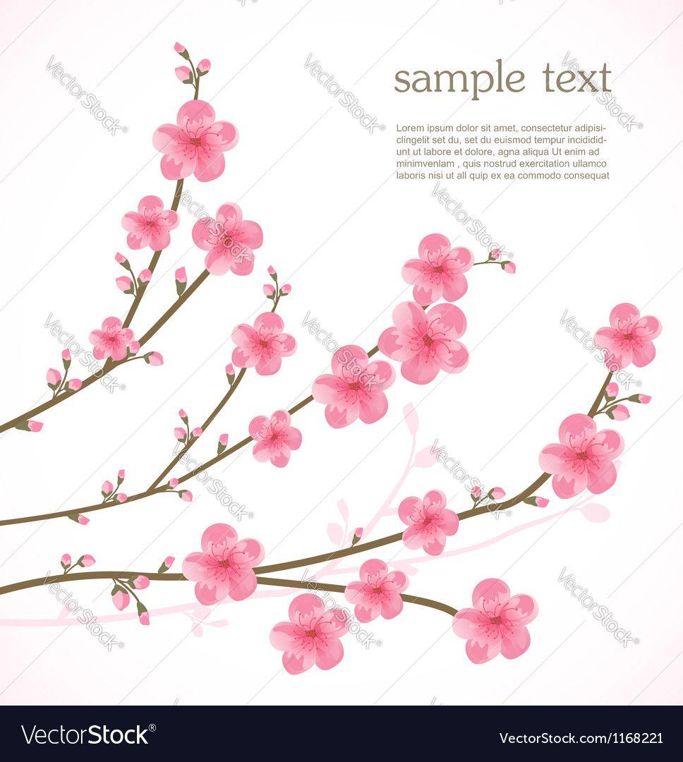 Cherry blossom card Vector Image by katerinarspb