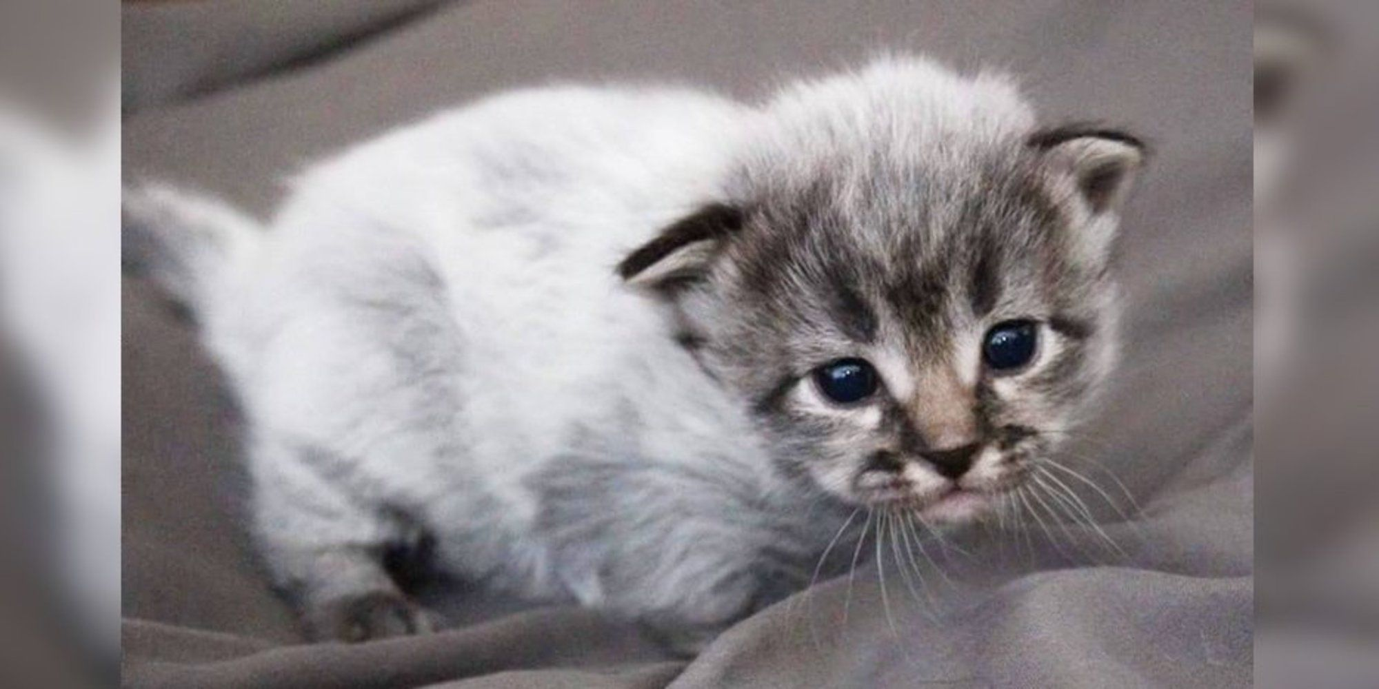 """7 Kittens Born with """"Fever Coat"""", Their True Colors Begin"""