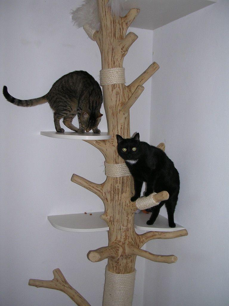 Wir Haben Rinde Abgeschält Danach Den Baum Trocknen Lassen Und Dann Geschliffen Verschiedenen Liegeebenen Sind Mit Fell überzogen Das Einfach