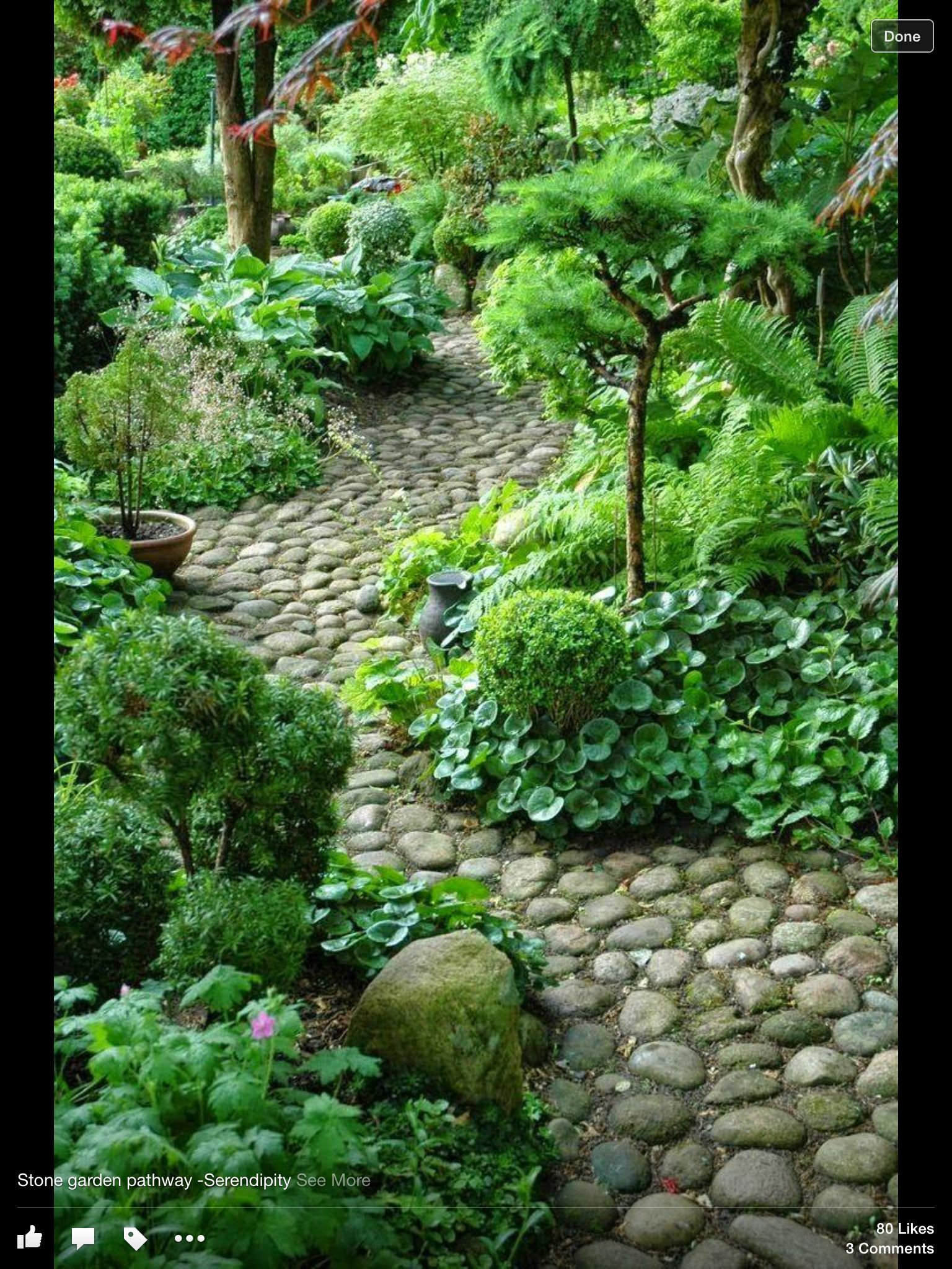 Gorgeous Shady Garden And Rock Path Beautiful Gardens Garden Paths Garden Pathway