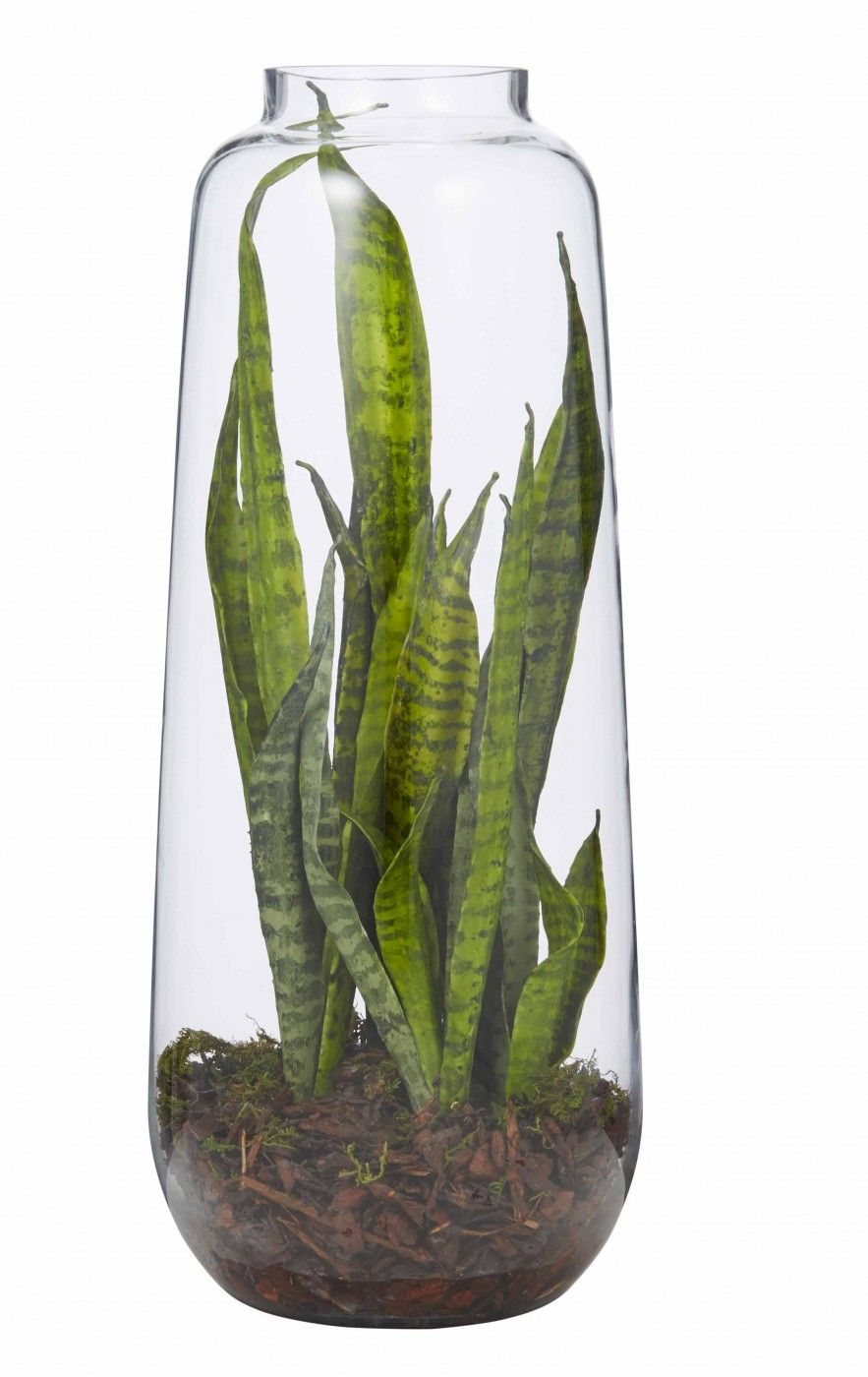 Sanseveria in Retro Glass Vase