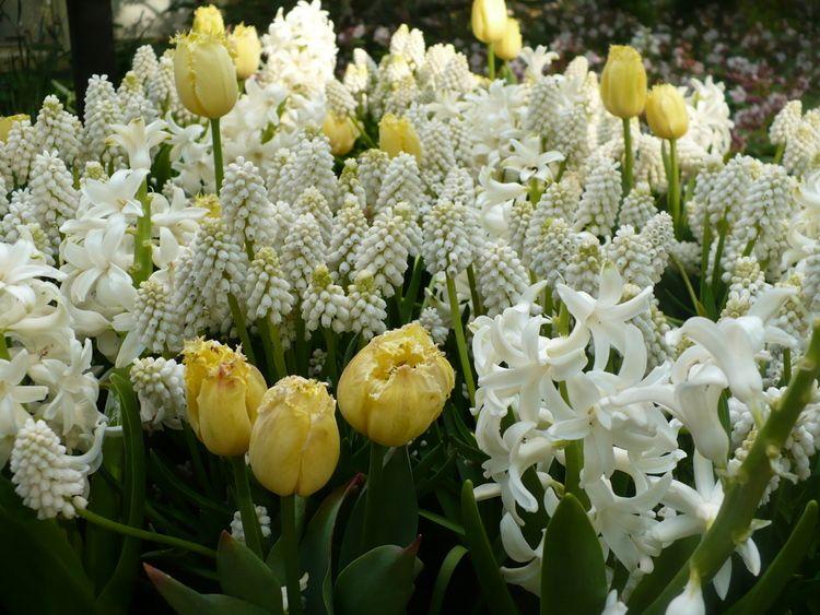 Szkielkiem Okiem I Sercem Biale Kwiaty Z Mojego Ogrodu Flowers Plants