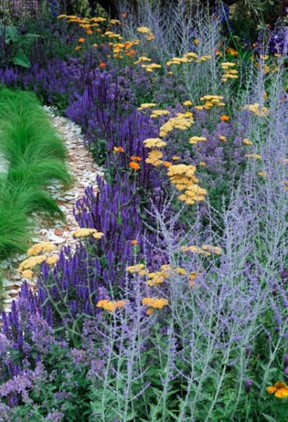 Perennial border with salvia common yarrow and russian for Perennial garden maintenance
