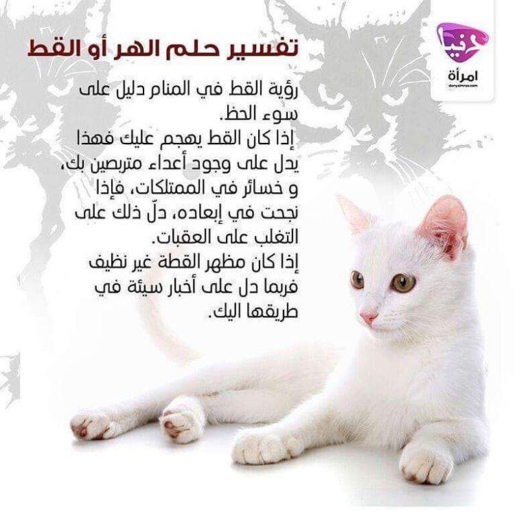 Emraa On Instagram هل حلمت حلما يتعلق بالقط هل تودين تفسير حلمك يمكنك المشاركة و متابعتنا تفسير حلم القط دنيا أحلام دنيا ام Instagram Posts Lol Lano