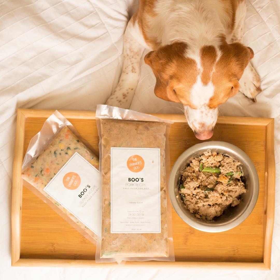 Dog food for beagles food homemade dog food dog food