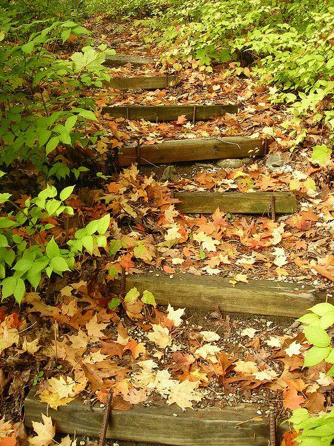 Log Steps Landscape Stairs Garden Stairs Garden Steps