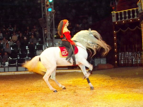 circus barelli: 26 thousand results found on Yandex.Images