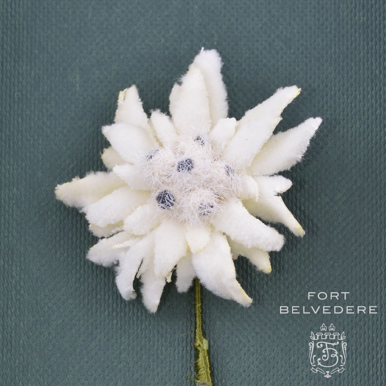 Edelweissboutonnierebuttonholeflowerfortbelvedere the art of edelweiss boutonniere buttonhole flower by fort belvedere mightylinksfo