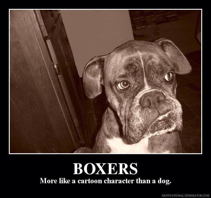 Boxers Entrenamiento Perros Perros Boxer Memes Perros