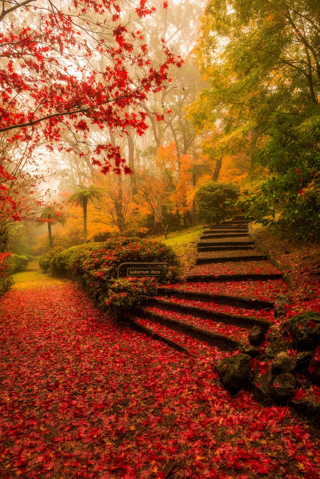 "j-k-i-ng: """"""Laburnum Steps"" by 