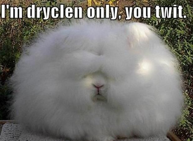 Bunnies With Awesome Personalities Easter Humor Funny Bunnies Funny Animal Pictures