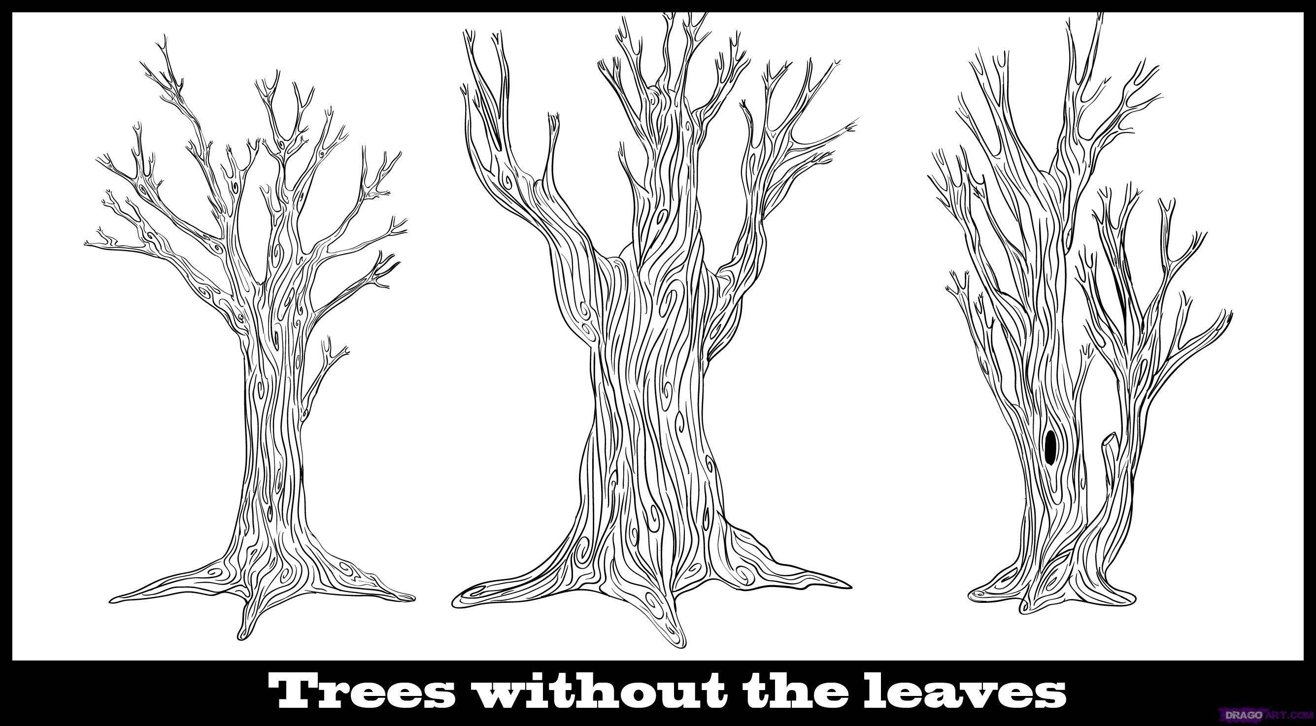 Drawing A Tree Without Leaves