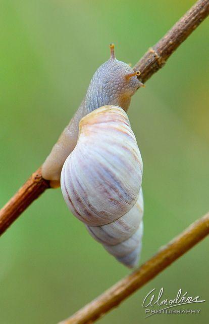 Pin On Slugs Snails