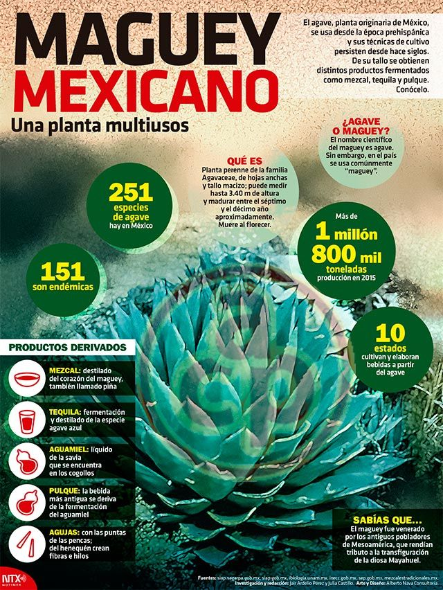 Pin de georgina enriquez en PLANTA MEXICANA | Pinterest | Las ...