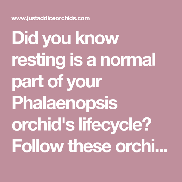 Photo of Orchid Care 101: How Do I Care for a Resting Orchid?