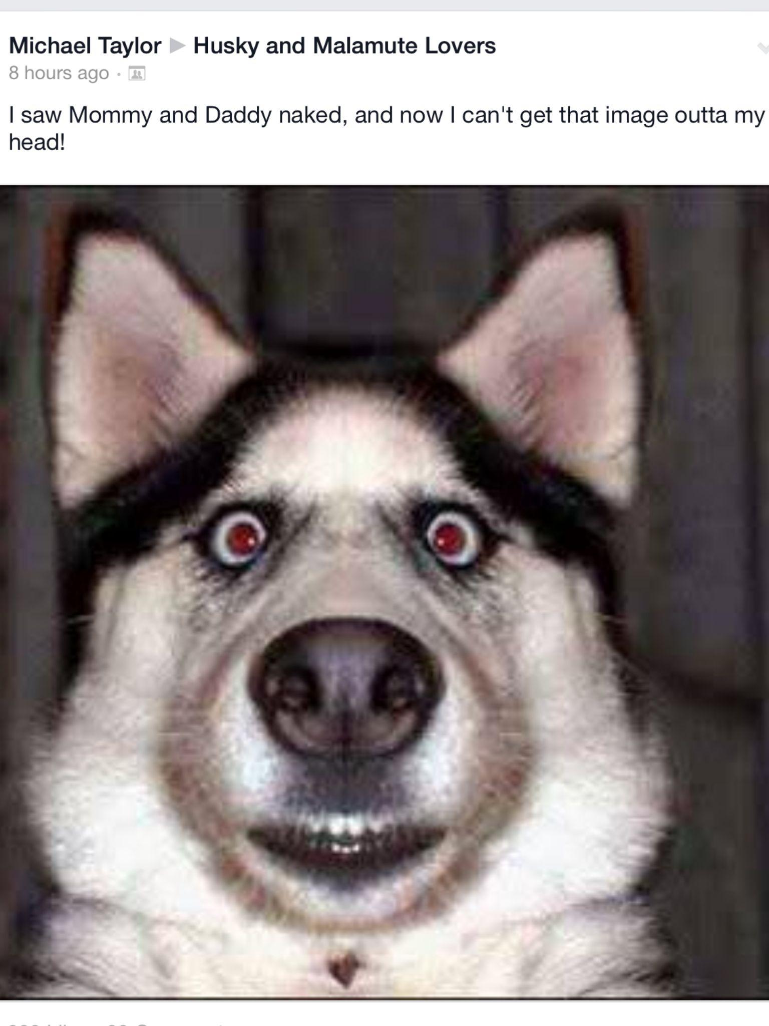 On The Floor Rolling Lol Imagenes Divertidas De Perros Humor De Perros Humor Divertido Sobre Animales