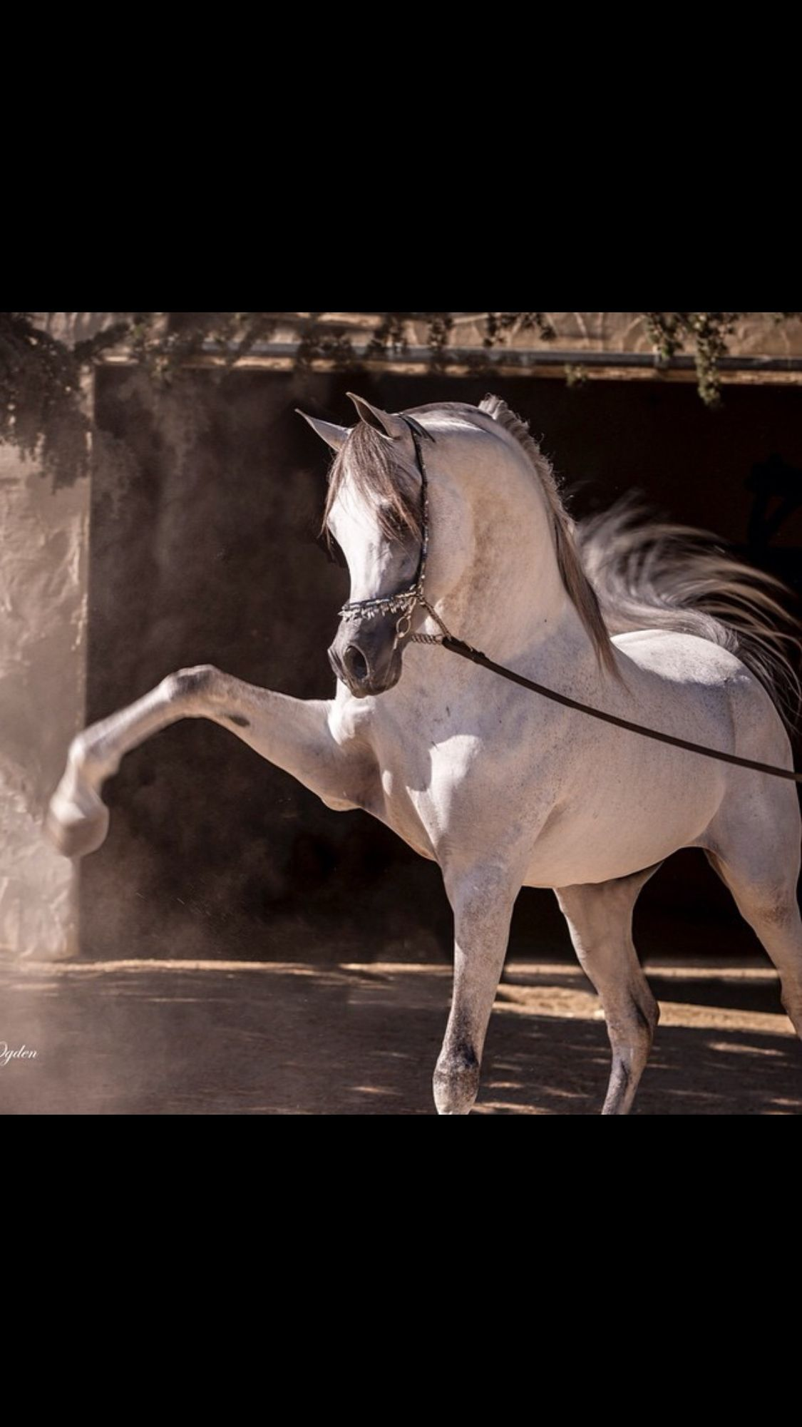 Pin By Amy Glick On My Entire World Revolves Around Them Pretty Horses Horses Arabian Horse