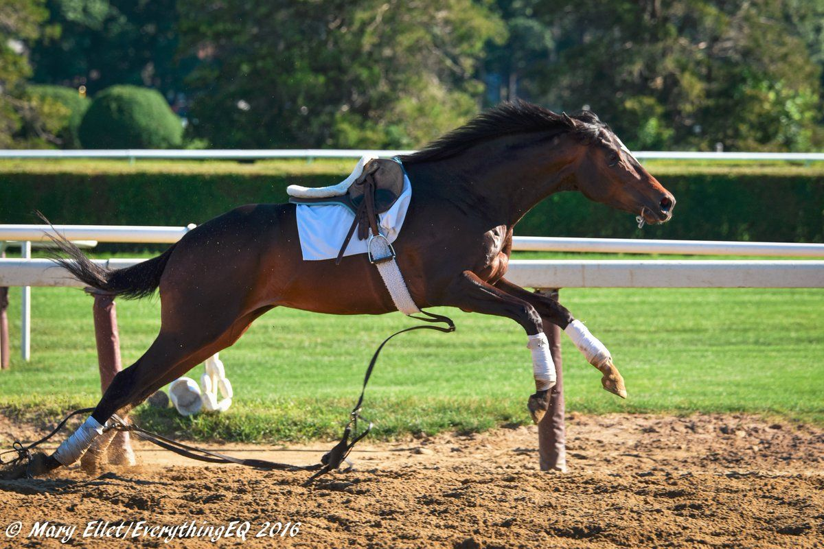 Pin By Nancy Alvarez On Whoa Just Being A Horse Funny Horses Thoroughbred Horse Horses