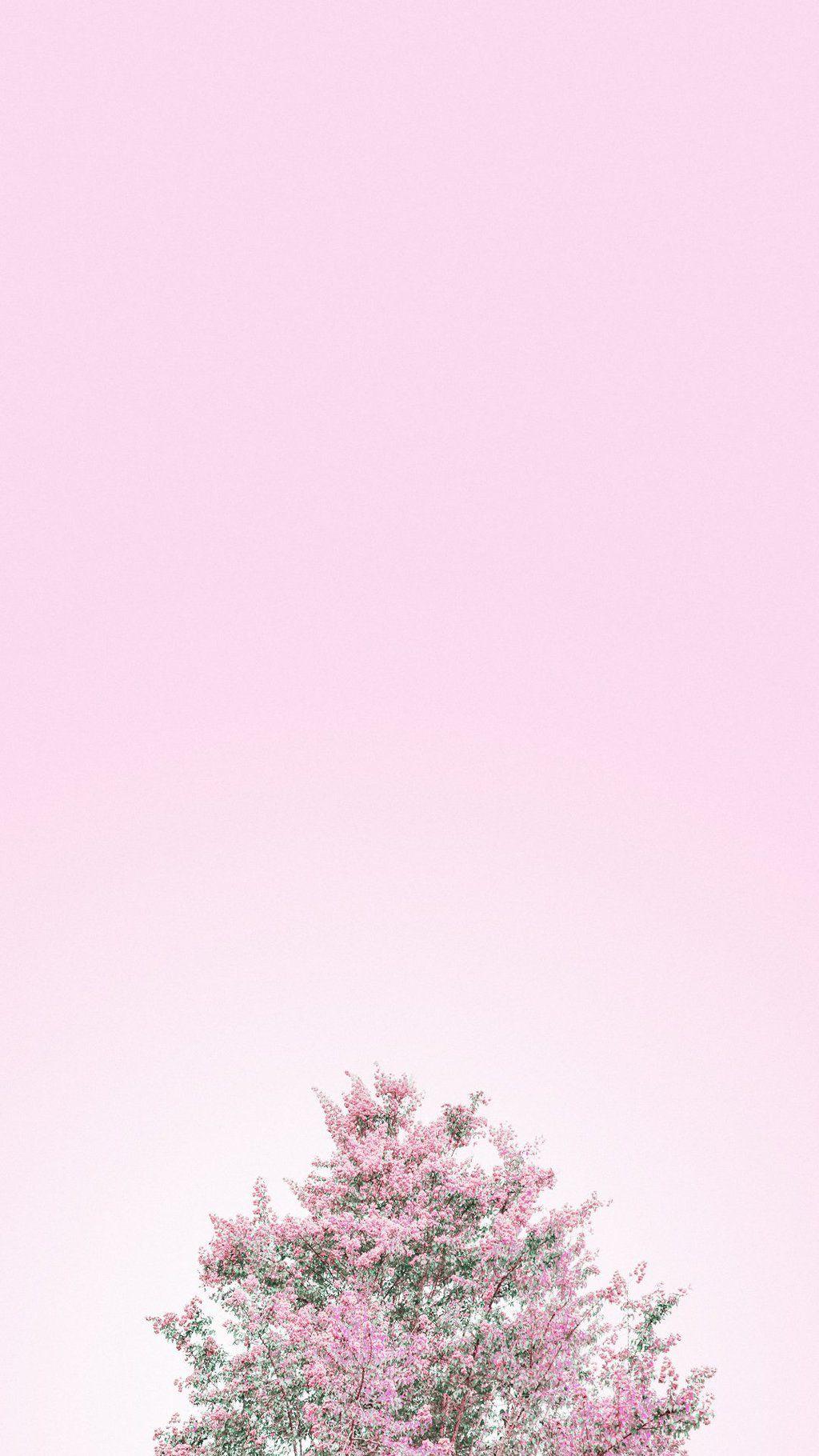 Aesthetic Minimalist Wallpaper Pink
