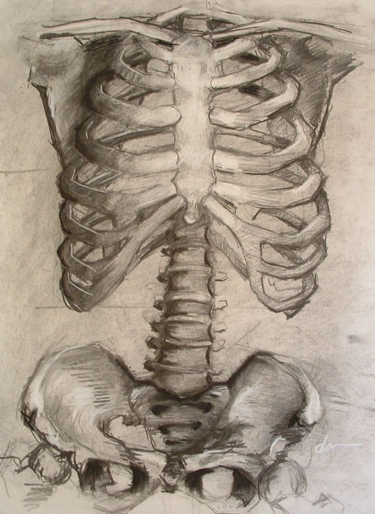 ribcage sketches | ribcage | Pinterest | Sketches, Anatomy and Drawings