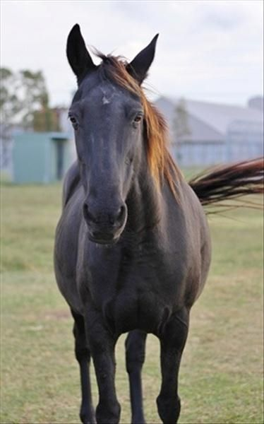 Introducing Delta Female 6yrs 1month Please Check Out The Adopt A Pet Site If Your Searching For A Special Pe Australia Adoption Rescue Board Austr