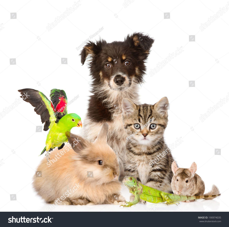 Large Group Of Animals Isolated On White Background Animals Animal Groups Pets