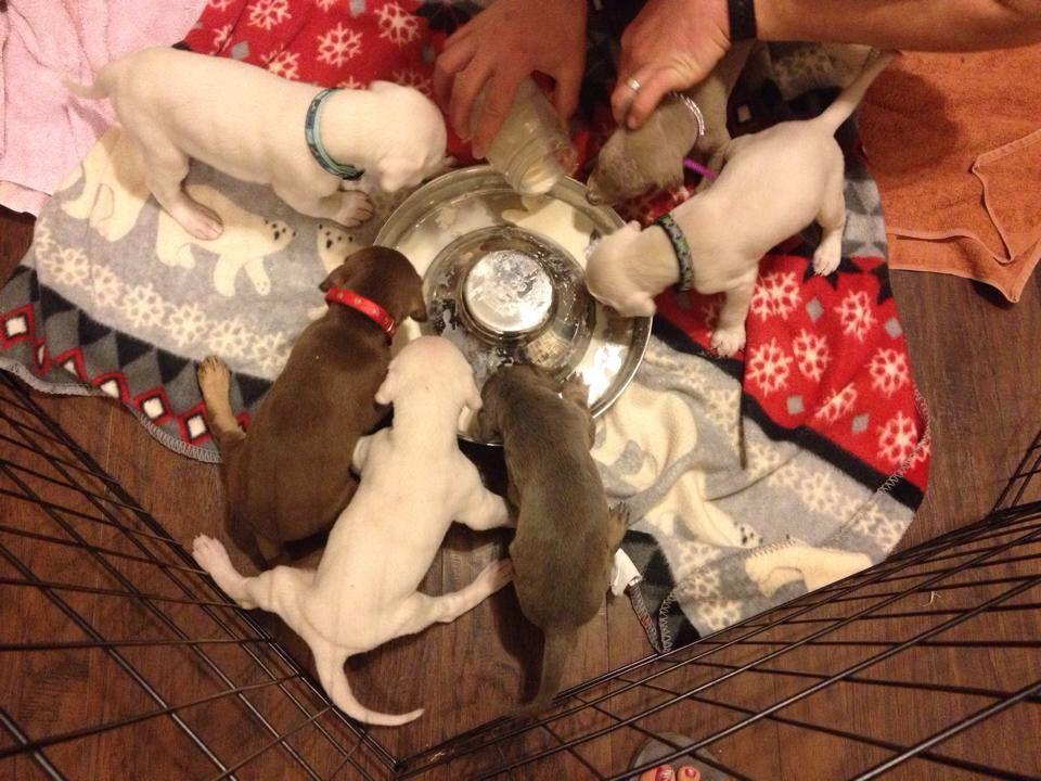 Pin On Doberman Puppies
