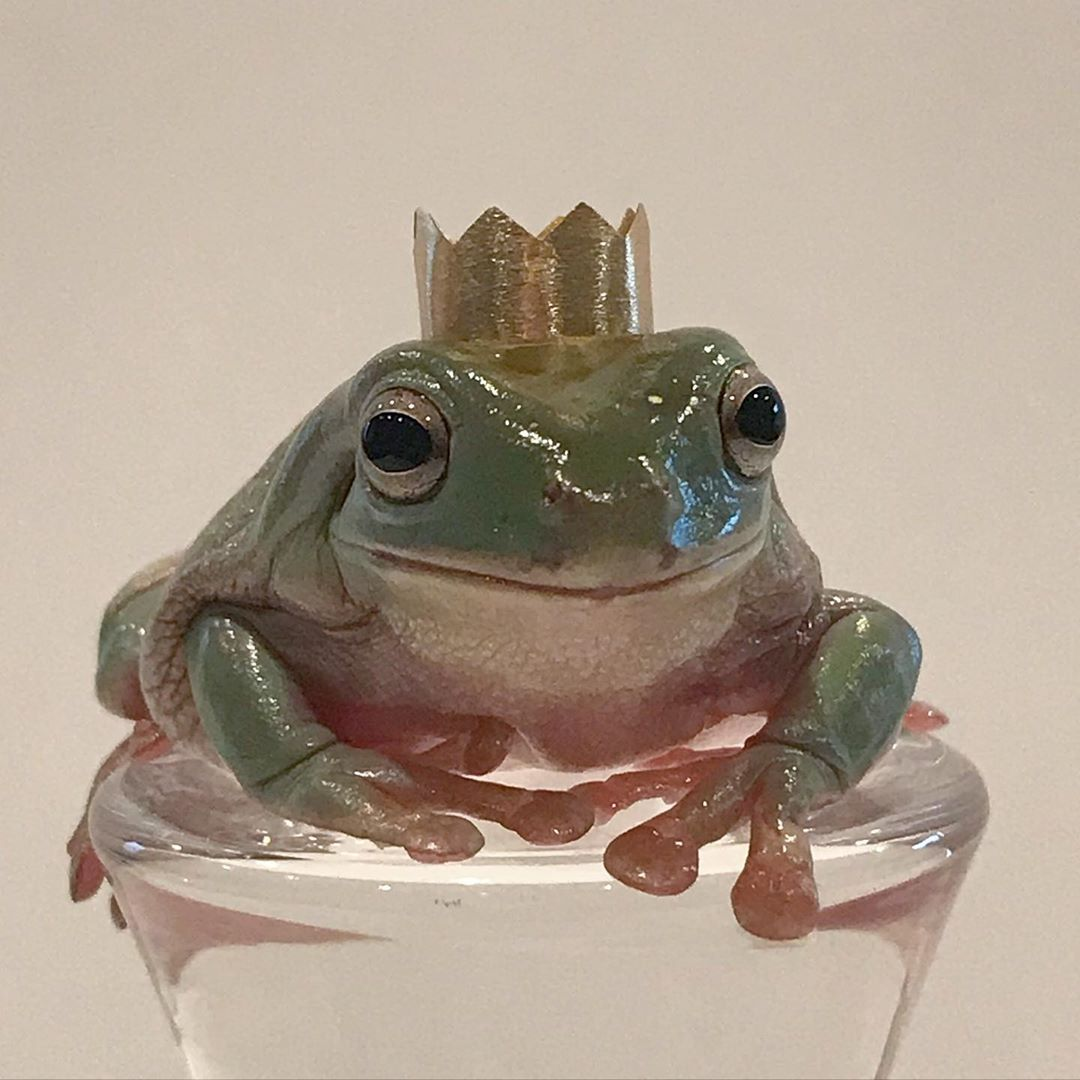 """Fantastic Froggos on Instagram: """"Oliver is such a prince"""