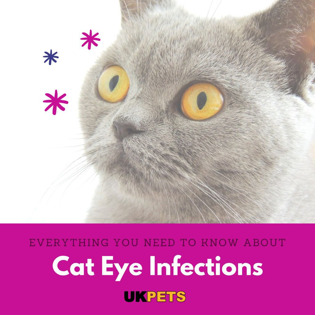 Cat Eye Infections How To Deal With Them Cat Eye Infection Kitten Eyes Eye Infections