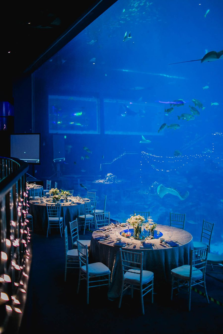 Ethan And Priscila S Ocean Gallery Wedding At Resorts World Sentosa S S E A Aquarium Ocean Wedding Theme Water Theme Wedding Aquarium Wedding