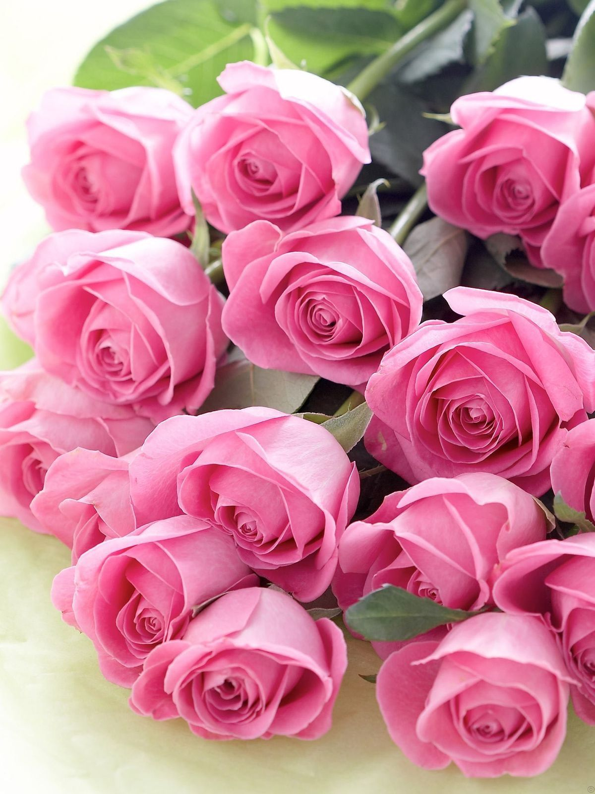 Pink roses b e a u t i f u l r o s e s pinterest pink roses