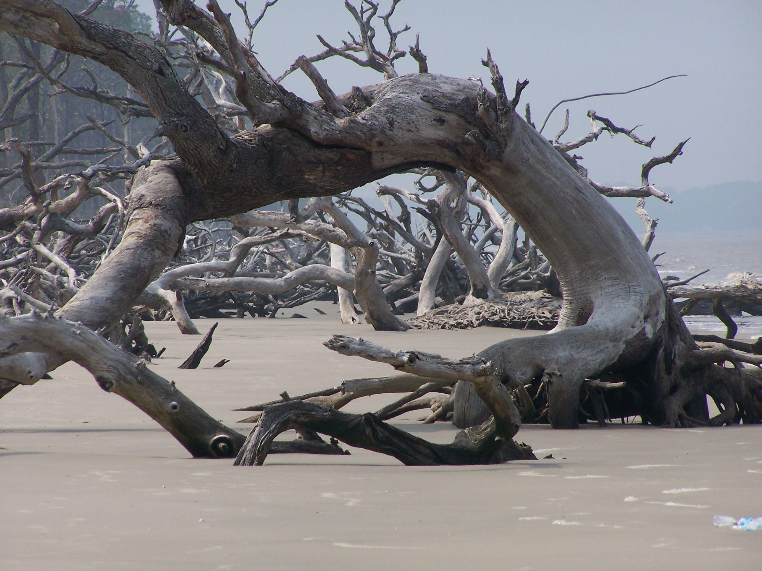 Driftwood Beach South Carolina With