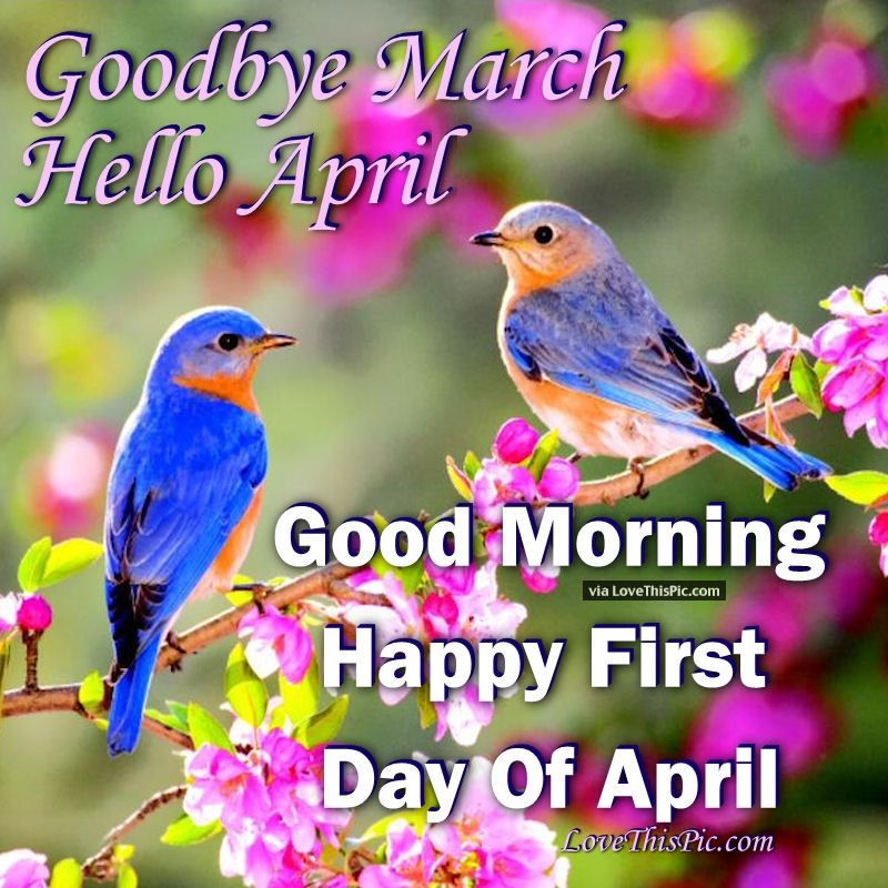 Good Morning Happy First Day Of April Greet The Day Good Morning