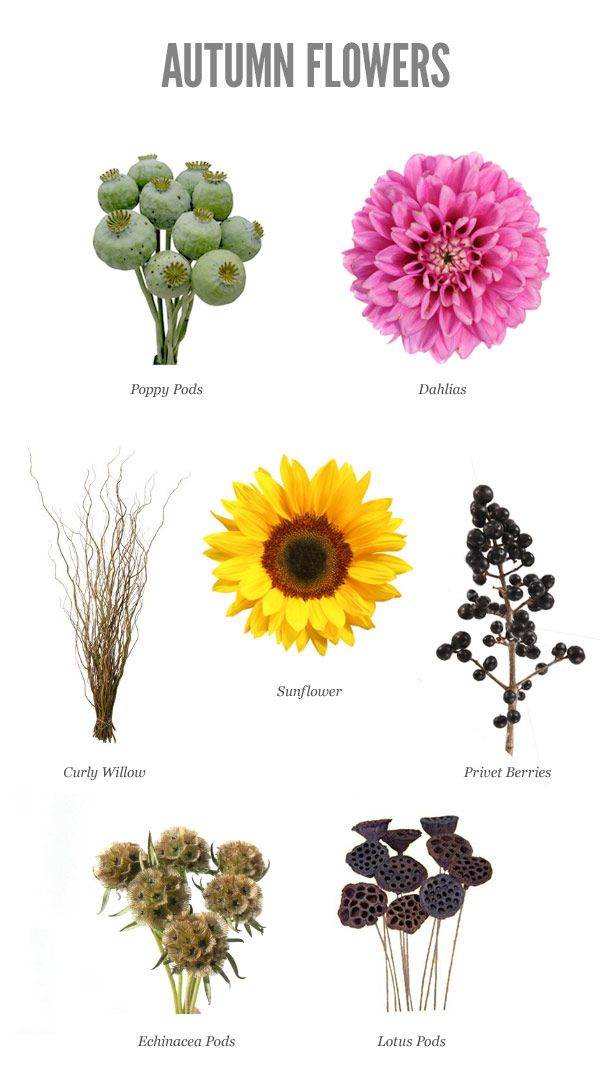 Best Flowers For An Early September Wedding Using Seasonal Fall Colors And Is Sure To Make Any Autumn Gorgeous