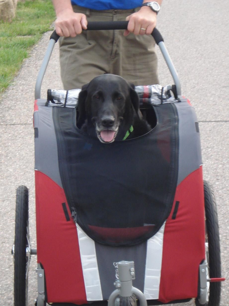 Large dog stroller Dog stroller, Dog gear, Dogs