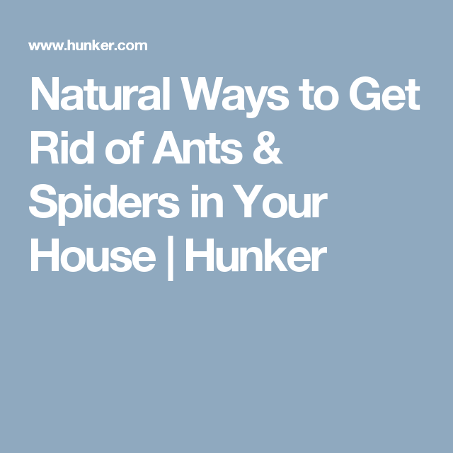 Natural ways to get rid of ants spiders in your house ant and natural ways to get rid of ants spiders in your house hunker ccuart Choice Image